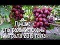 Лучшие ультраранние формы винограда 2019. THE BEST EARLY GRAPE VARIETIES