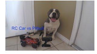 RC Car vs Pitbull