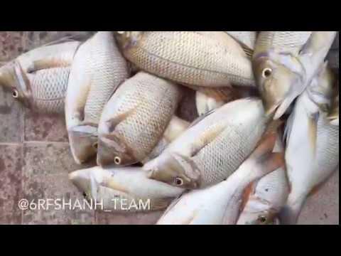 Sheri fish hunting using hand line, Dubai Offshore