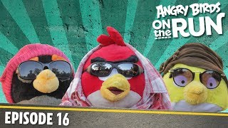 Angry Birds on The Run | Fashion Show - S1 Ep16