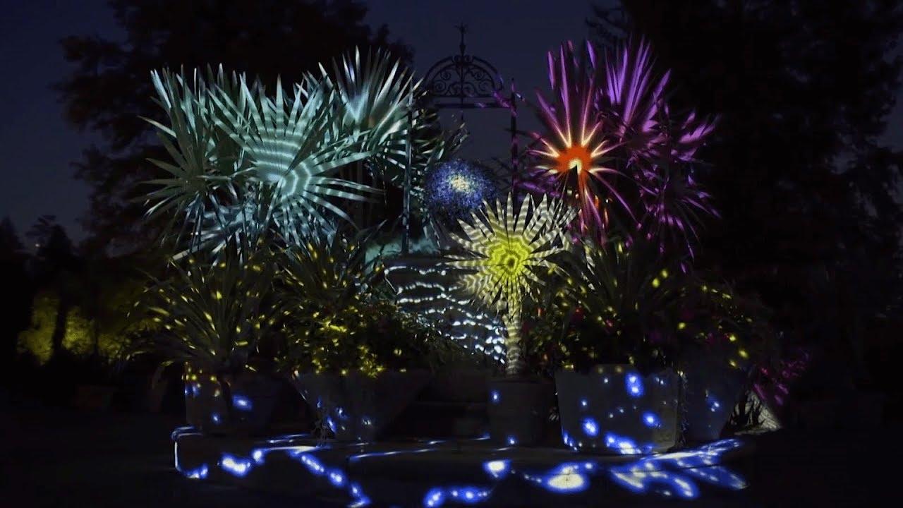 Desert Turns Electric At Botanical Gardens