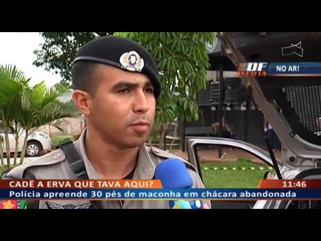 DF ALERTA - Polícia apreende 30 pés de maconha em chácara abandonada