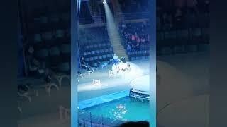Мы с детьми в Запорожском цирке. Цирк на воде 🤹♂️часть 12