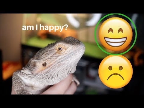 HOW TO KNOW IF YOUR BEARDED DRAGON IS HAPPY!