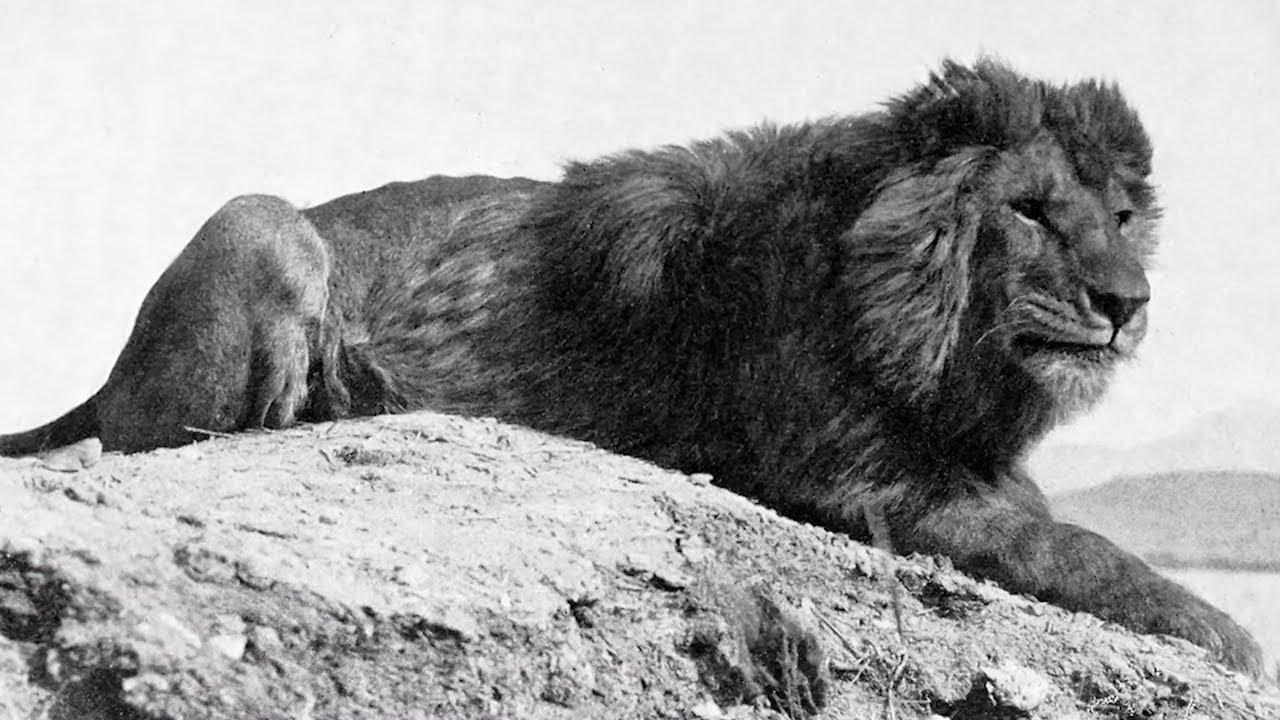 Animals That Went Extinct in the 20th Century