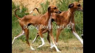 MATING ANIMAL S.E.X. FAIL - الحيوانات الجنس girl & her dog at the Kennel Club