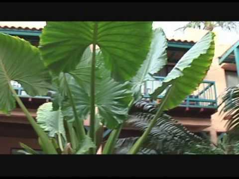 Baan Samui Resort-Koh Samui-Trailer