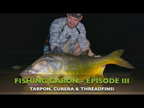 FISHING GABON - EPISODE III - TARPON, CUBERA & THREADFIN FISHING