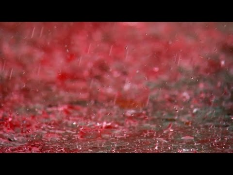 Mysterious Blood Rain of 21st Century in India. Scientists are still trying to figure it out.