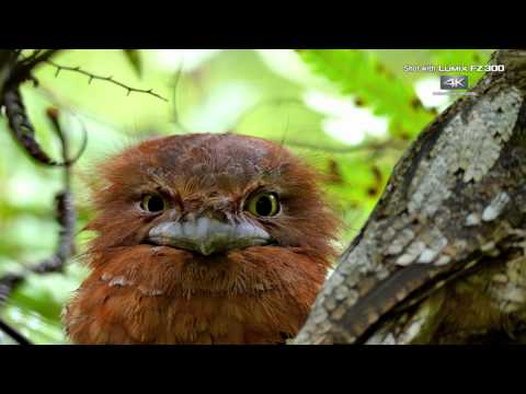 "Panasonic LUMIX FZ300 4K Video ""The Blessings Of Nature In Sri Lanka"" By Bence Máté"
