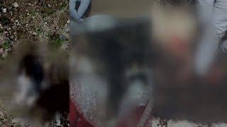'궁금한 이야기Y' 잔혹한 길고양이 연쇄살해범, 그의 정체는?