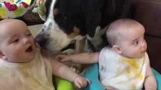 Funny Dog vs baby viral compilation videos