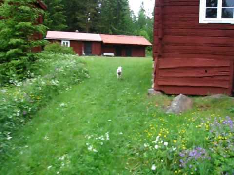 Sweden, typical setting hälsingland
