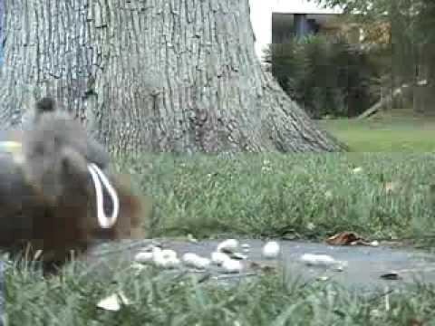 squirrel attack | Tumblr