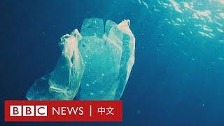 塑料袋冷知識:原來膠袋起初是一項環保的工具!- BBC News 中文