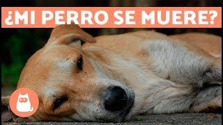 Cómo saber si tu perro se va a morir