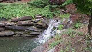 Japanese Maple Garden Tips and Tricks by Head Coach Pat Dye @ Quail Hollow Garden