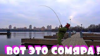 Рыбалка с фидером в центре Киева на Днепре!