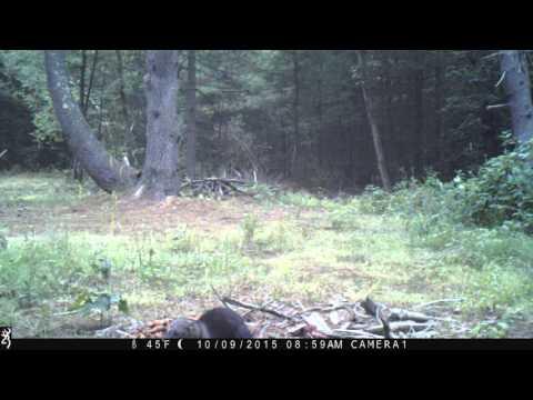 Trail Cam  - Fisher Cat