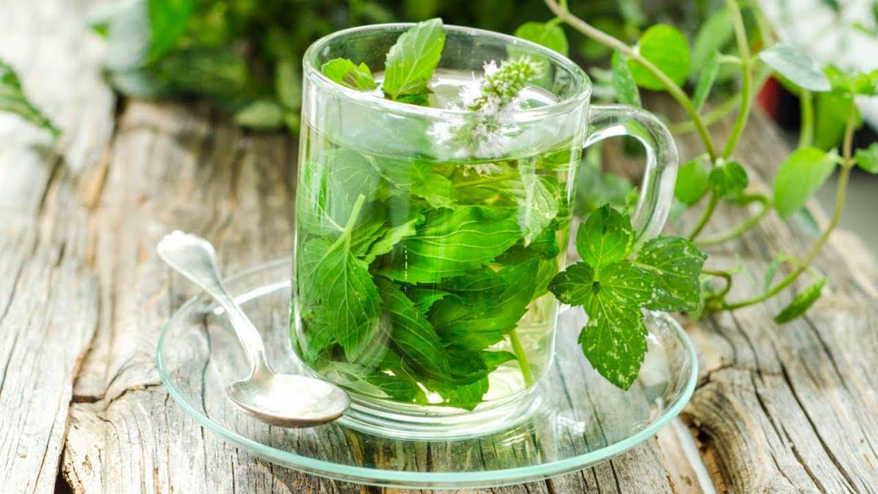 Para que sirve el ajenjo propiedades curativas del for Planta decorativa con propiedades medicinales