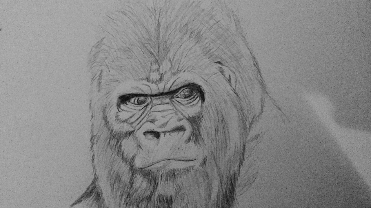 Uncategorized Gorilla Drawings how to draw a gorilla youtube gorilla