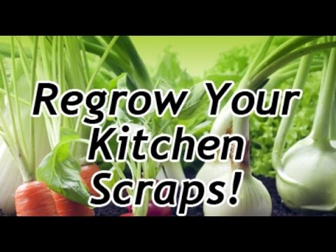 Re-grow your Vegetables and Herbs from Recycled Kitchen Scraps - Save Money with Free Food