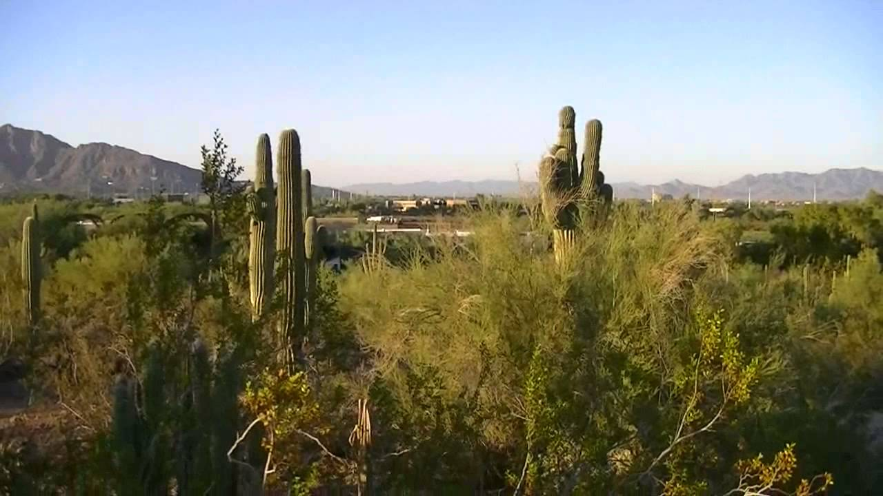 Phoenix\'s Desert Botanical Garden and Papago Park (HD) - YouTube