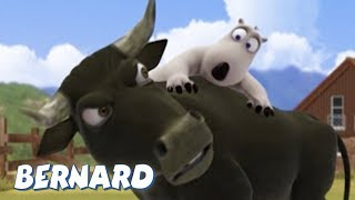 Download Bernard Bear | Bullfighter AND MORE | 30 min Compilation | Cartoons for Children