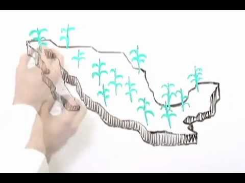 El Instituto De Los Mexicanos En El Exterior Youtube