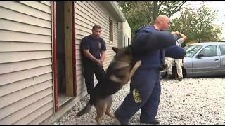 Police Dog Training - Police Dog Training