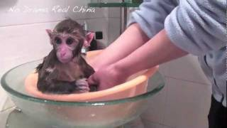Chinese Monkey 1---- Professor Mai and His Shower--ND\RC .m4v