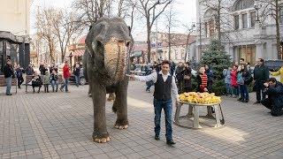Крымчанам представили на цирковой площади индийских слонов из Германии