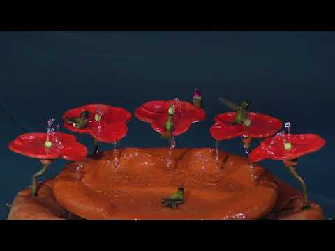 """4 Hummingbirds Bathing in the NEW """"Flower Playground Fountain"""""""