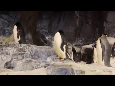 Amazing Penguins!! My Orlando Vacation to seaworld parks and entertainment