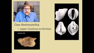 What are the major groups of fossil Molluscs?