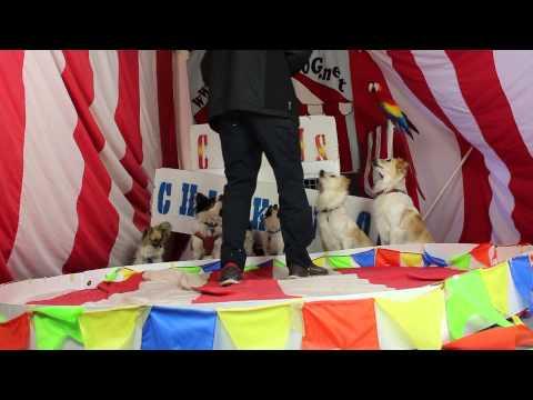 Six Dog Training Session-Circus Chickendog