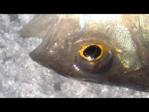 Рыбы - Презентации по биологии