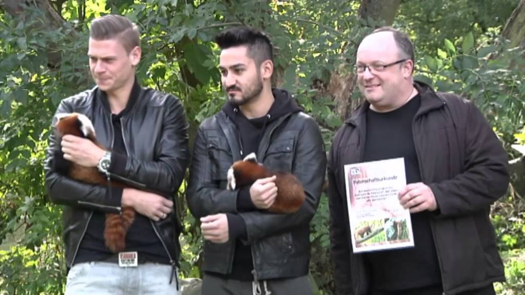 Zootag in Dortmund: BVB-Stars werden Panda-Paten | Pisczek, Gündogan