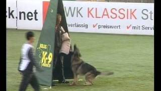Schutzhund Training Equipment - Wusv  Comptition Belgian Malinois - Malinois  Training - K9 Training