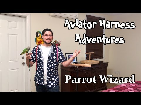Aviator Harness - Leash for Parrots Sold by Parrot Wizard