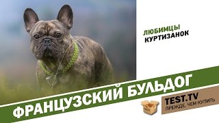 TEST.TV: Французские бульдоги собаки куртизанок.
