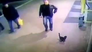 Белорусского милиционера уволили за пинок котенка