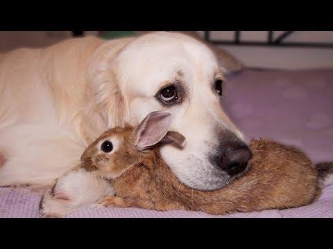 Dog Hugs A Rabbit - Amazing Friendship