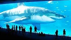 10 größten Haie auf der Welt!