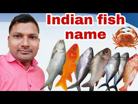 Top Ten Indian Fish!!Indian Fish Names!!name Of Indian Fish!!