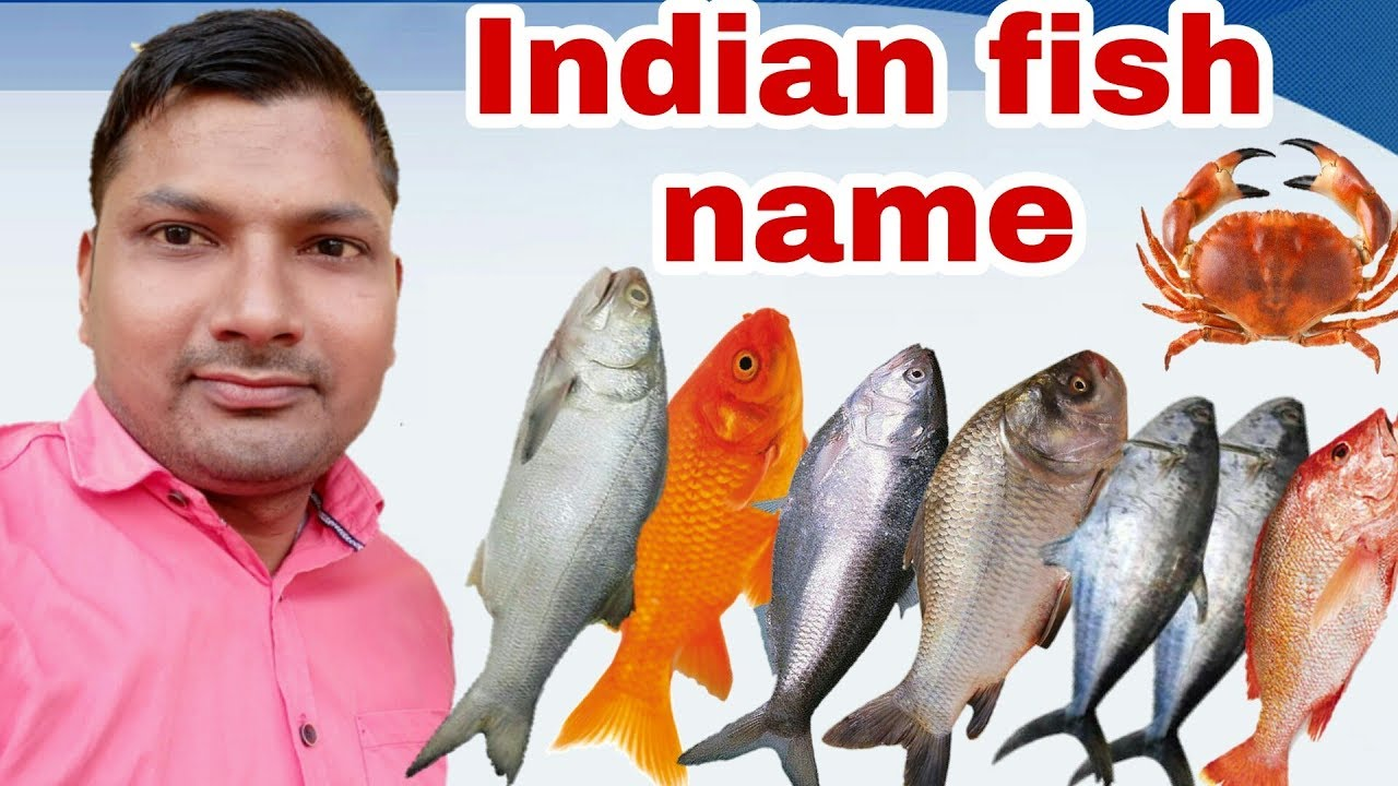 Top Ten Indian Fish Indian Fish Names Name Of Indian Fish Youtube