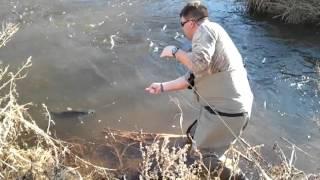 catfish on a one wt fly rod