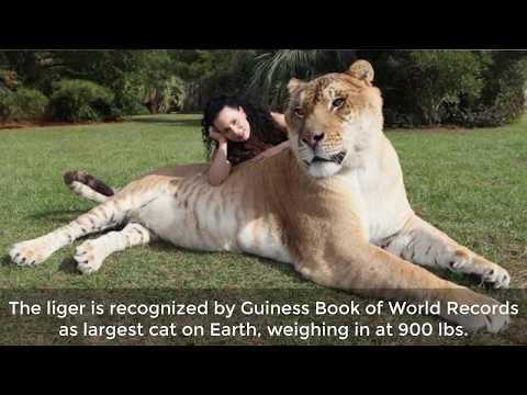 9 Of The World's Biggest Animals