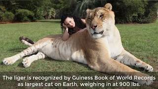 9 Of The World's Biggest Animals