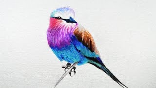 How to draw a bird -- Prismacolor colored pencils.